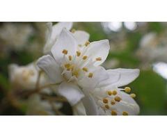 鹿背山創造の森プログラム「山の花調査」